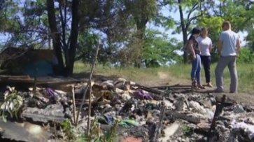 Живодеры заживо сожгли щенков в Запорожье (видео) - «Происшествия»