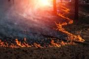 В Чернобыле загорелась зона отчуждения