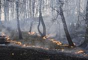 В Забайкалье введен режим ЧС регионального характера из-за природных пожаров - «Лесные пожары»