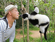 Le Monde (Франция): Внимание к жестокому обращению с животными говорит о повышении нравственности общества - «Наука»