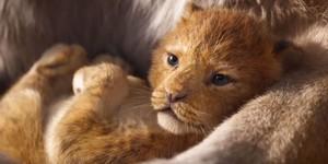 Премьера тизера: новый «Король Лев» - «Новости кино»