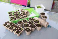Когда и как сажать перец на рассаду? | Огород | Дача - «Происшествия»