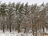 Лесной конфликт: Евросоюз пошел в торговую атаку (УНIАН, Украина) - «ЭКОНОМИКА»