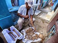 Nature (США): кости майя воскрешают утраченную цивилизацию - «Наука»