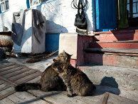 Природа Чернобыля процветает: ученые фиксируют, что зона отчуждения полна животных (Newsweek, США) - «Наука»