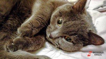 Хозяин кота-ассасина сдает его в аренду, чтобы разубедить костромчан заводить животных