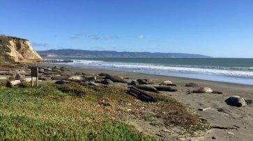 Тюлени захватили один из калифорнийских пляжей из-за «шатдауна» - «Политика»