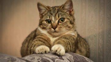 В России могут запретить делать кошкам «мягкие лапки»